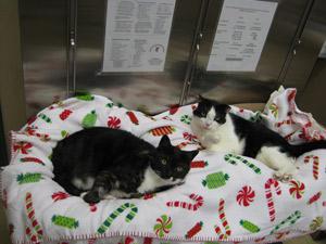 Vet Services Belle Mead Animal Hospital In Hillsborough Nj