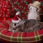 Charlie Brown Rabbit patient Belle Mead Animal Hospital