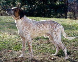 Adoptable Dog Bojangles Animal Alliance NJ