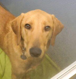BMAH Teddy Animal Alliance Adoptable Dog