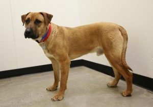 Wiley Adoptable Dog by Animal Alliance of New Jersey