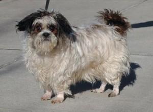 Charlie Animal Alliance Dog Aug 2016 Belle Mead Animal Hospital Adoptable Pets
