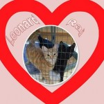 Leonard and Raj Recently Adopted cats Belle Mead Animal Hospital