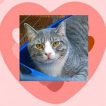 Cat Manny Adopted Belle Mead Animal Hospital