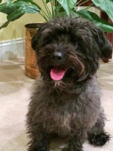 McCoy Animal Alliance Adoptable Dog