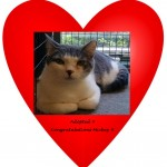 Mickey Cat Adopted Belle Mead Animal Hospital Felines First Inc.