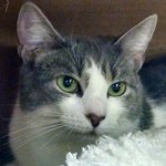 Molly Adopted Cat Belle Mead Animal Hospital Felines First Inc.