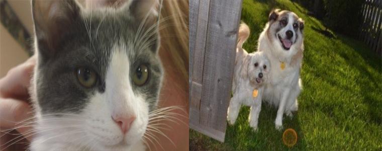 Pet Adoptions Belle Mead Animal Hospital