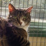 Adopted Tippy Cat Felines First Inc Belle Mead Animal Hospital