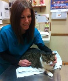 Dr. Heather Simon, VMD, examines Pudgie at the Belle Mead Animal Hospital