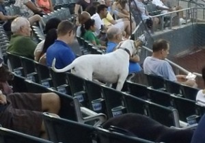 The Somerset Patriots host Bark in the Park Night, August 27, 2013