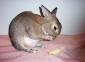 Rabbits need their nails trimmed regularly.