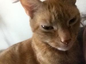 Senior cat - Belle Mead Animal Hospital website