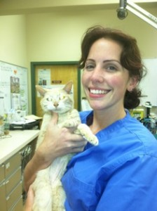 Dr. Erin Rockhill, DVM, Belle Mead Animal Hospital, with cat patient