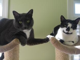 Indoor cats enjoying their home