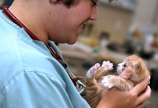 Dr. Kim Somjen, DVM with kitten