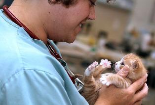 Dr. Kim Somjen, DVM with kitten