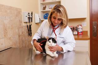 Veterinarian exams a cat using a stethoscope. Credit AVMA/Facebook