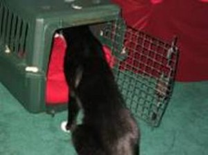 Cat exploring carrier