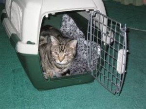 Cat resting inside carrier