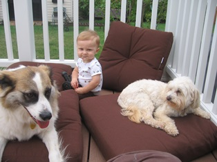 Baby Henry and dogs