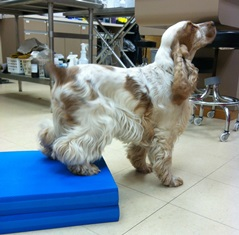 Canine therapeutic exercise - Physical Rehabilitation Therapy