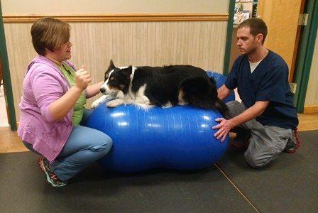 Dr Kim Somjen, DVM demonstrates a canine therapeutic exercise with her dog Chill