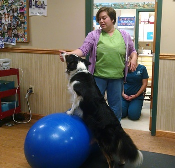 Dr. Kim Somjen demonstrates therapeutic exercise with dog Chill at Open House