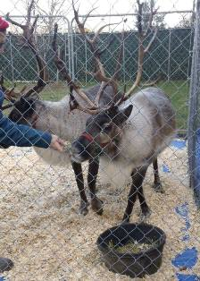 Reindeer Rocket and Fetch 2013