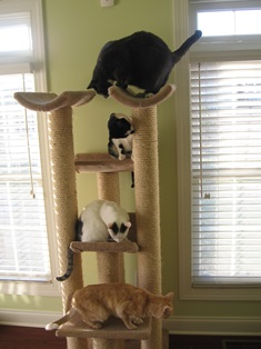 Social enrichment - sisal scratching post
