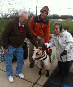 Dallas the Goat dressed for Christmas at Belle Mead Animal Hospital's December 2014 Reindeer and Open House Event