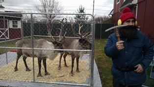 Reindeer Rocket and Fetch with Yukon Cornelius