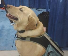 Canine Patient Macii