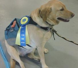 Maci shows off Canine Good Citizen Award