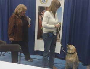 Maci taking the Canine Good Citizen Test at the Super Pet Expo