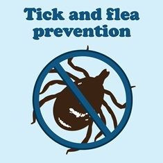 Ticks and Fleas on a dog