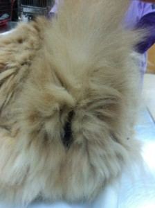 Matted fur on cat patient