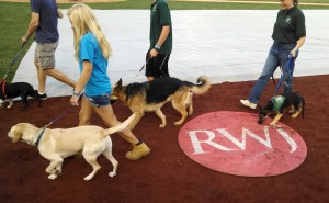 Pooch Parade at Somerset Patriots Bark in the Park Night