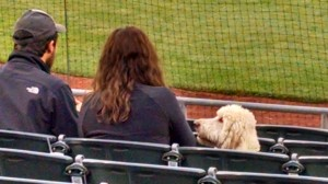 Dog at Somerset Patriots Bark in the Park Night