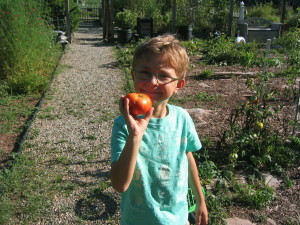 Henry and Tomato from Ranch C Ranch garden