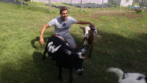 Dr. Joe Martins, DVM, with goats at Triple C Ranch