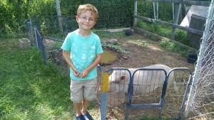 Henry with Edison the Potbellied Pig at Triple C Ranch