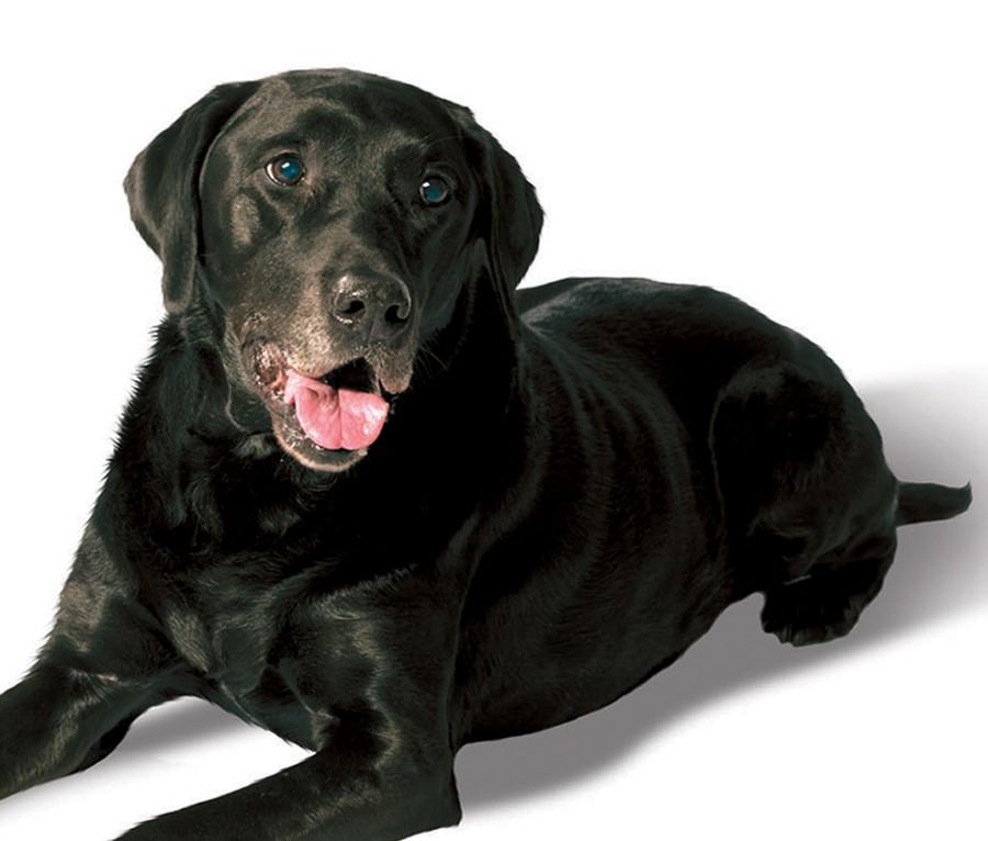 dogheader