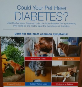 Signs of pet diabetes