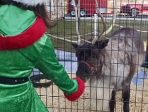 Reindeer Crown Vet 2016