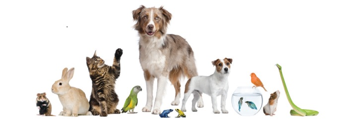 Animals Dogs Cats Exotics Birds Reptiles