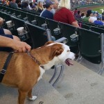 Dog at Bark in the Park