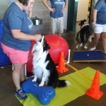 Dr Somjen Dog Chill Physical Rehab Demo