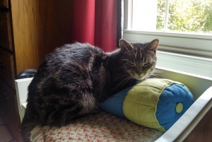 Cat patient Belle Mead Animal Hospital