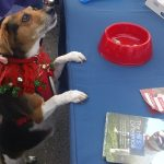 Canine Visitor to Belle Mead Animal Hospital Live Reindeer Event